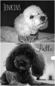 bella and jenkins Collage